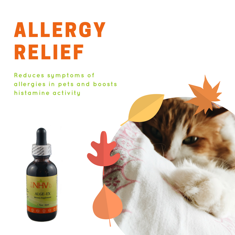 AlgeEx for cats Nasal allergies remedies, Cat allergy