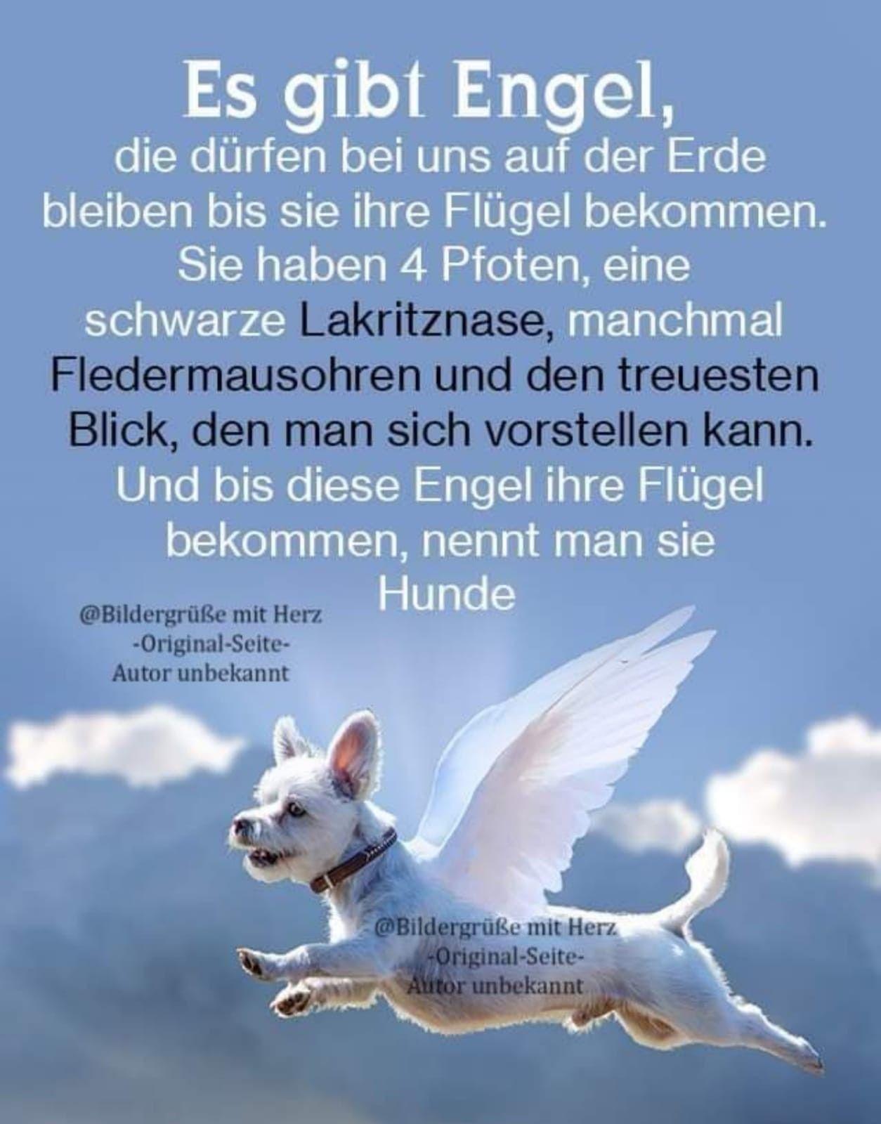 Pin von Janikosch auf Hunde Info in 2021 | Hundesprüche