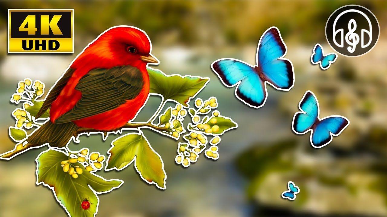 Расслабляющие звуки природы! Шум реки и пение лесных птиц ...