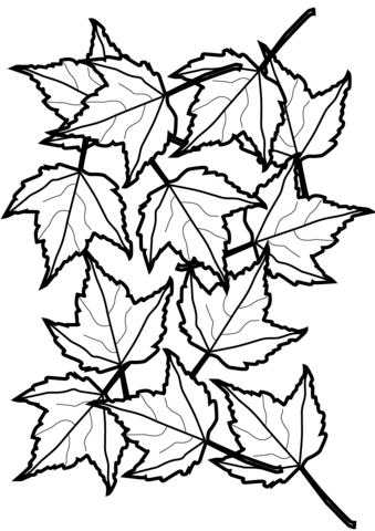 Autumn Maple Leaves Coloring page | Coulouring | Pinterest