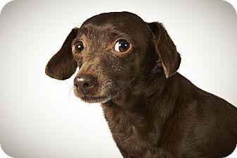 Kurby By Richard Phibbs Dog Adoption Dachshund Adoption Dog Friends