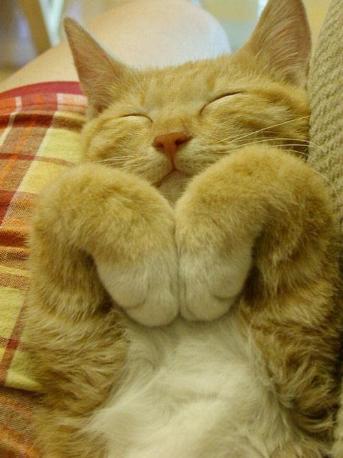 smile kitty!