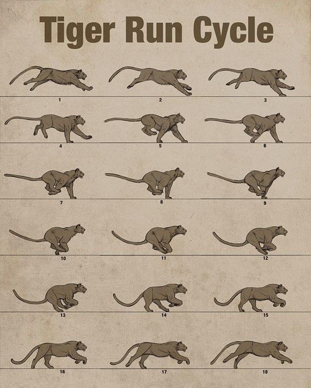 Tiger-run cycle by Aaron Blaise — Animal Anatomy | Running ...