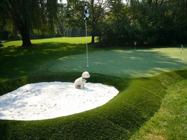 Este cachorrin tambien se apunta a una partida!! #puttinggreencespedartificial #golf