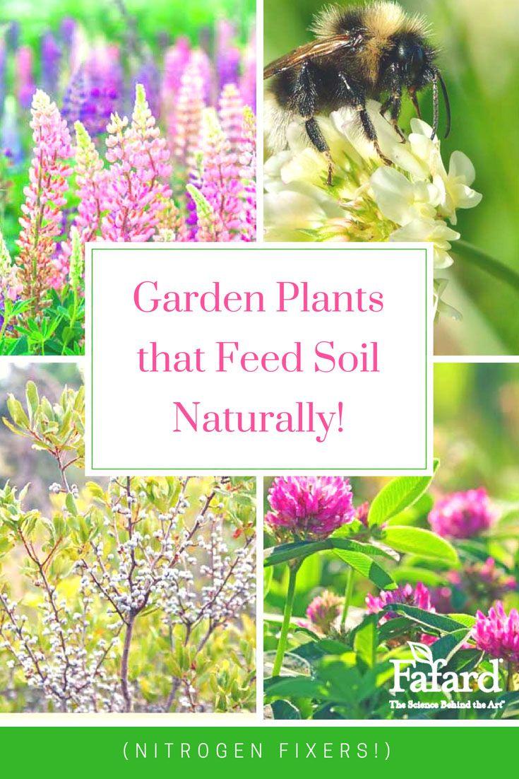 Garden plants that feed soil naturally nitrogen fixing