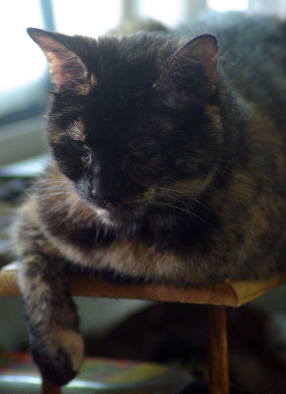 Daily Photo Reprise: Sleepy Neighborhood Watch Tortie, 2012