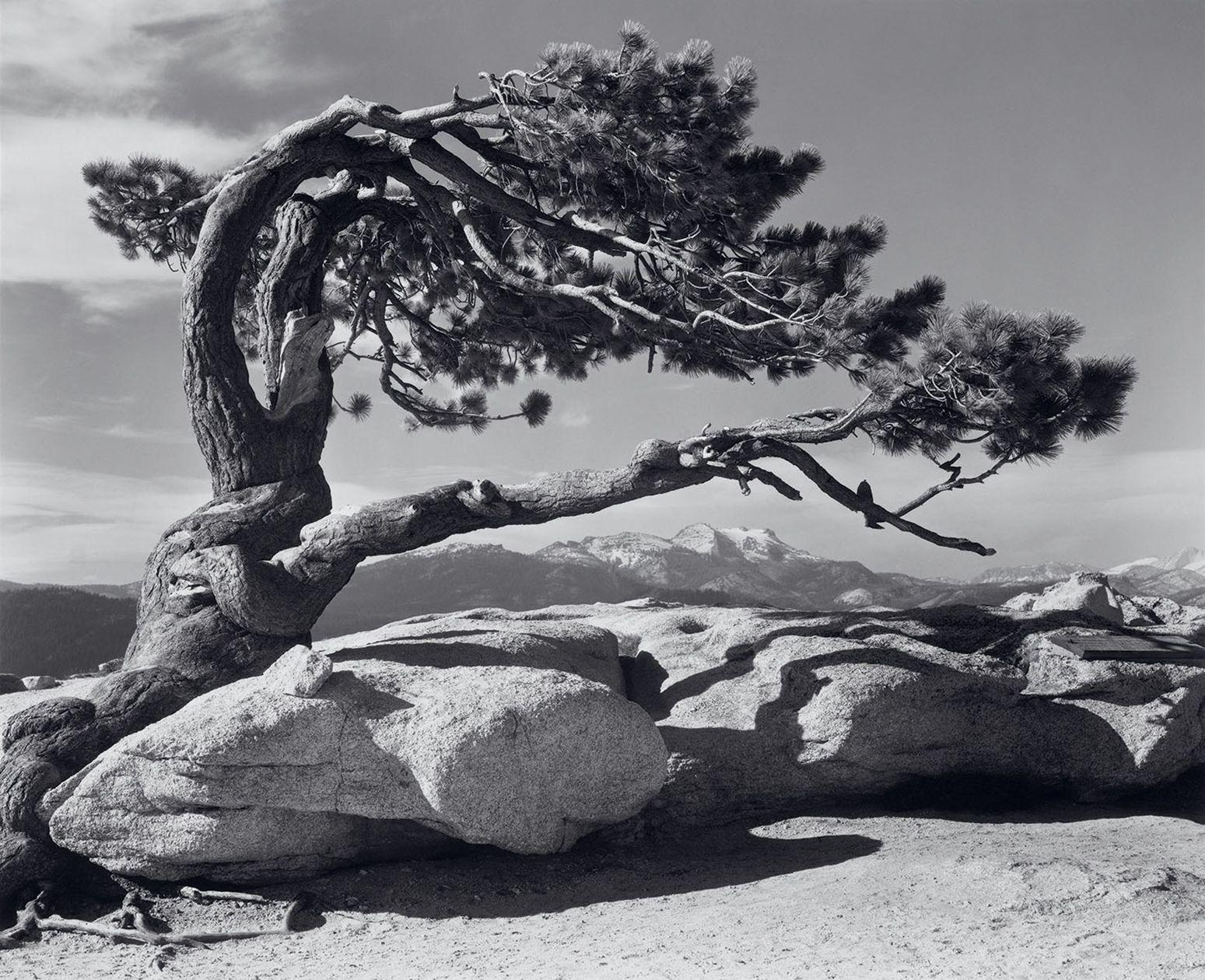 Ansel Adams Gallery In Yosemite History Activities | Black & White ...