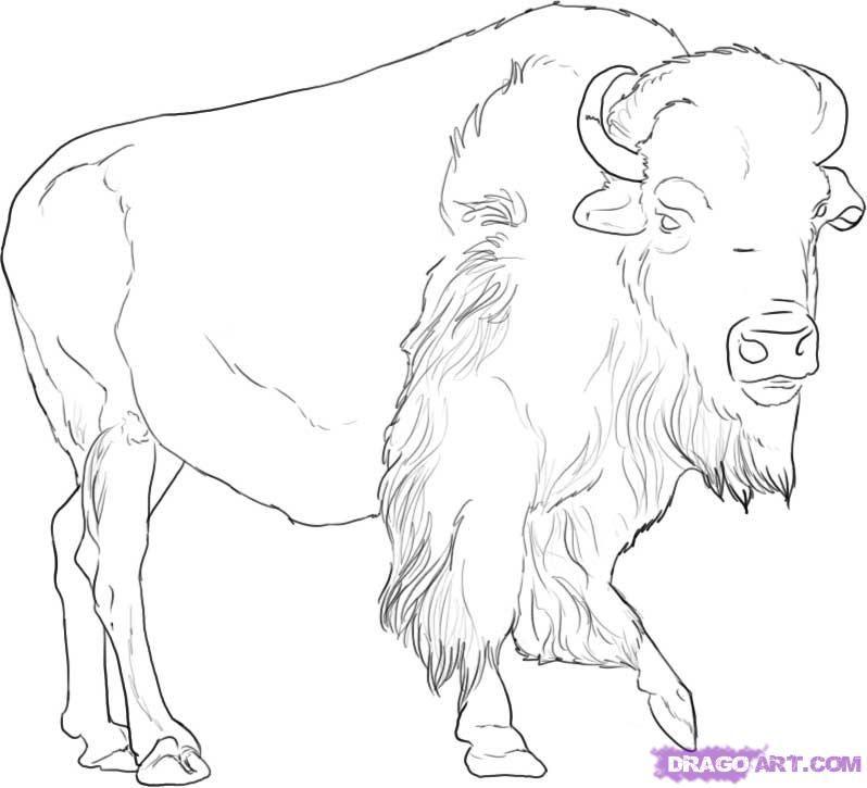bison+Pencil+Drawings | American Buffalo Drawing | Pencil drawings ...