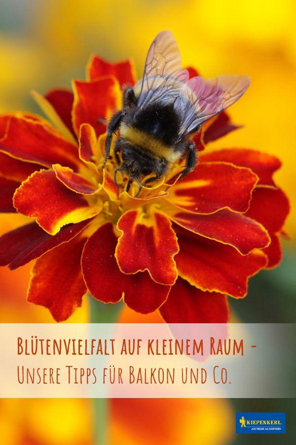 Balkon Ideen für Insektenfreunde: Blumenvielfalt auf kleinem Raum