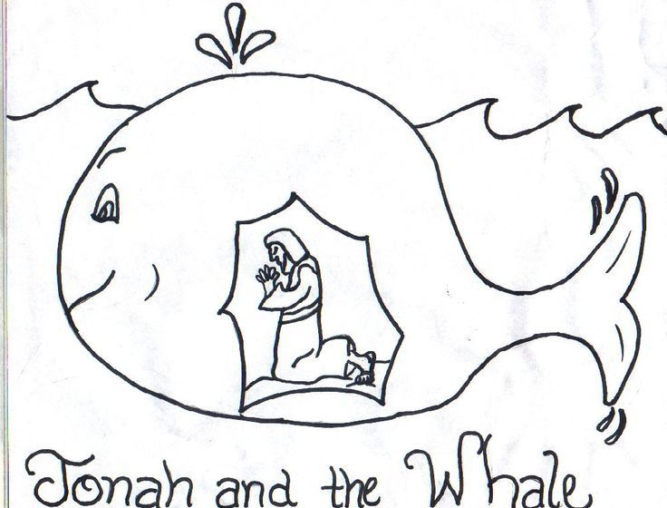 free clip art to color whales bing images