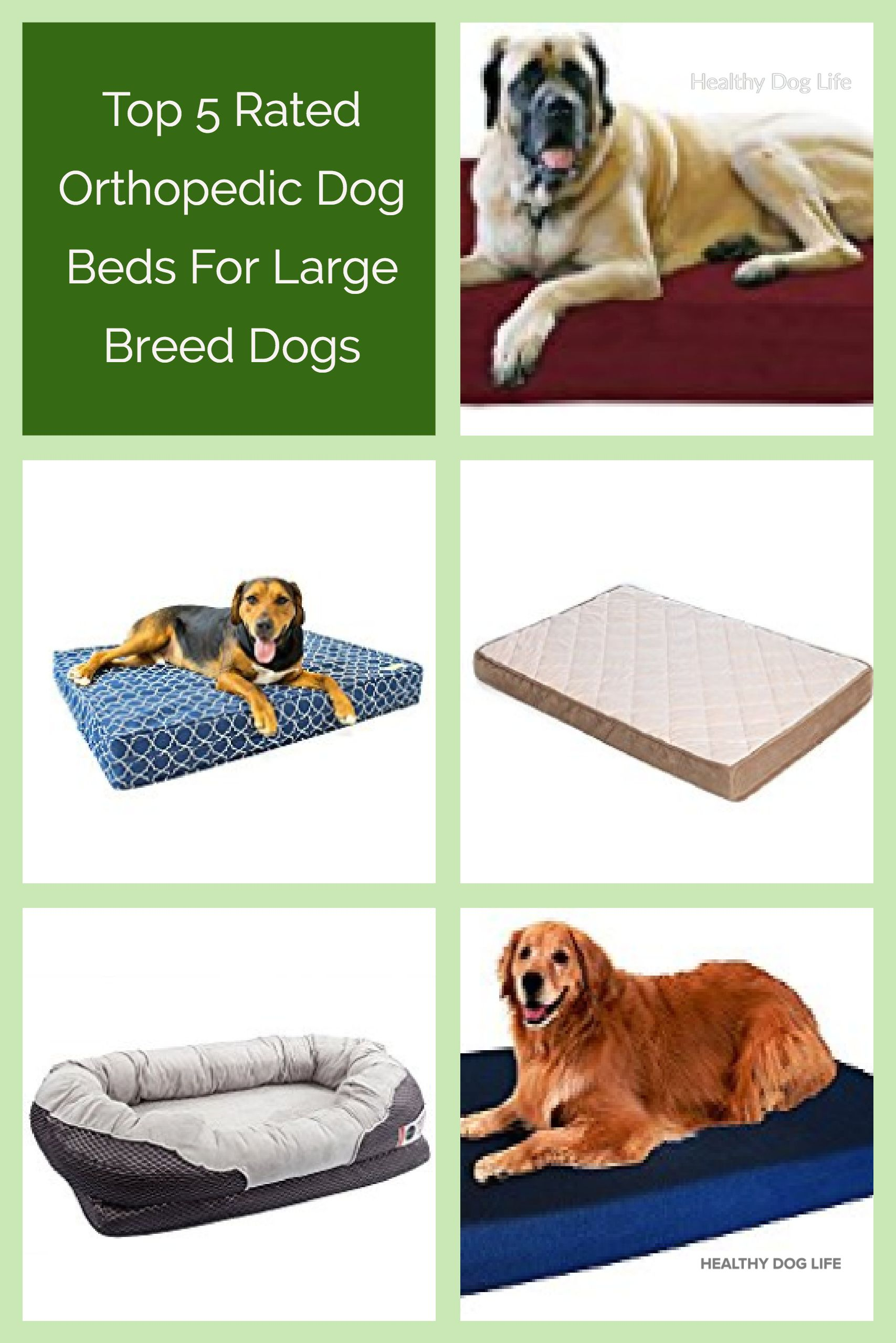 Top 5 Rated Orthopedic Dog Beds For Large Dogs (With