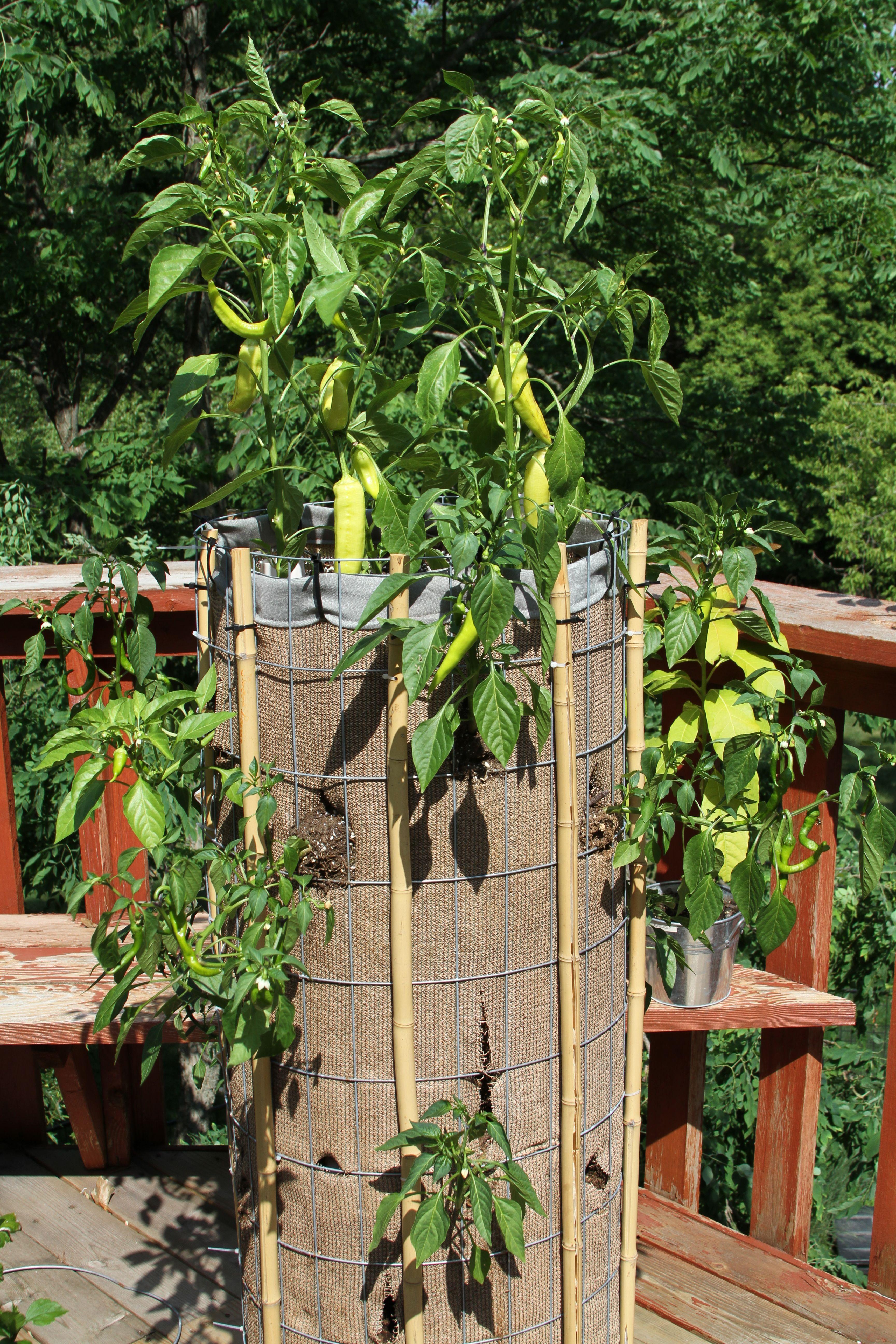 my vertical pepper garden coolest invention gardening garden rh pinterest com