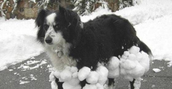 Some of the Strangest Dogs in the World