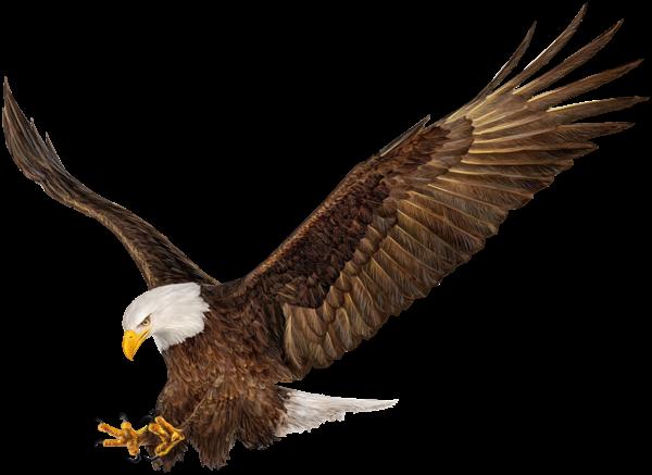 American Eagle Png Clip Art Image Bald Eagle Art Images Eagle