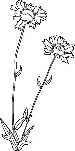 Wildflower Wildflower Drawing Flowers Flower Png Images