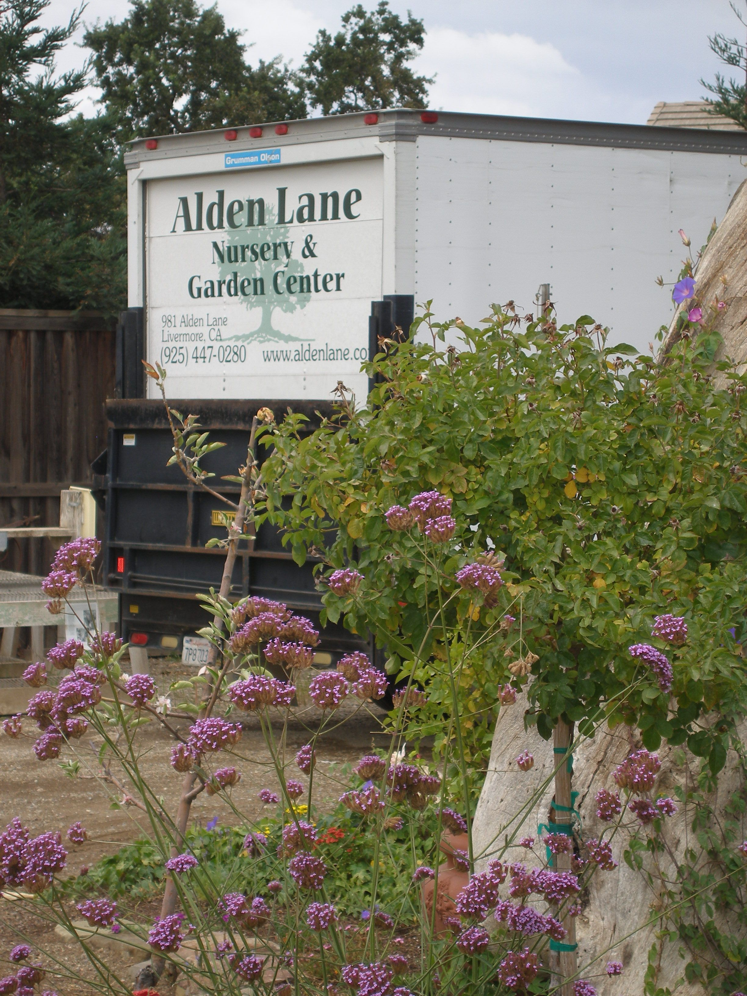 We Are Happy To Deliver In The Local Area Old Oak Tree Garden