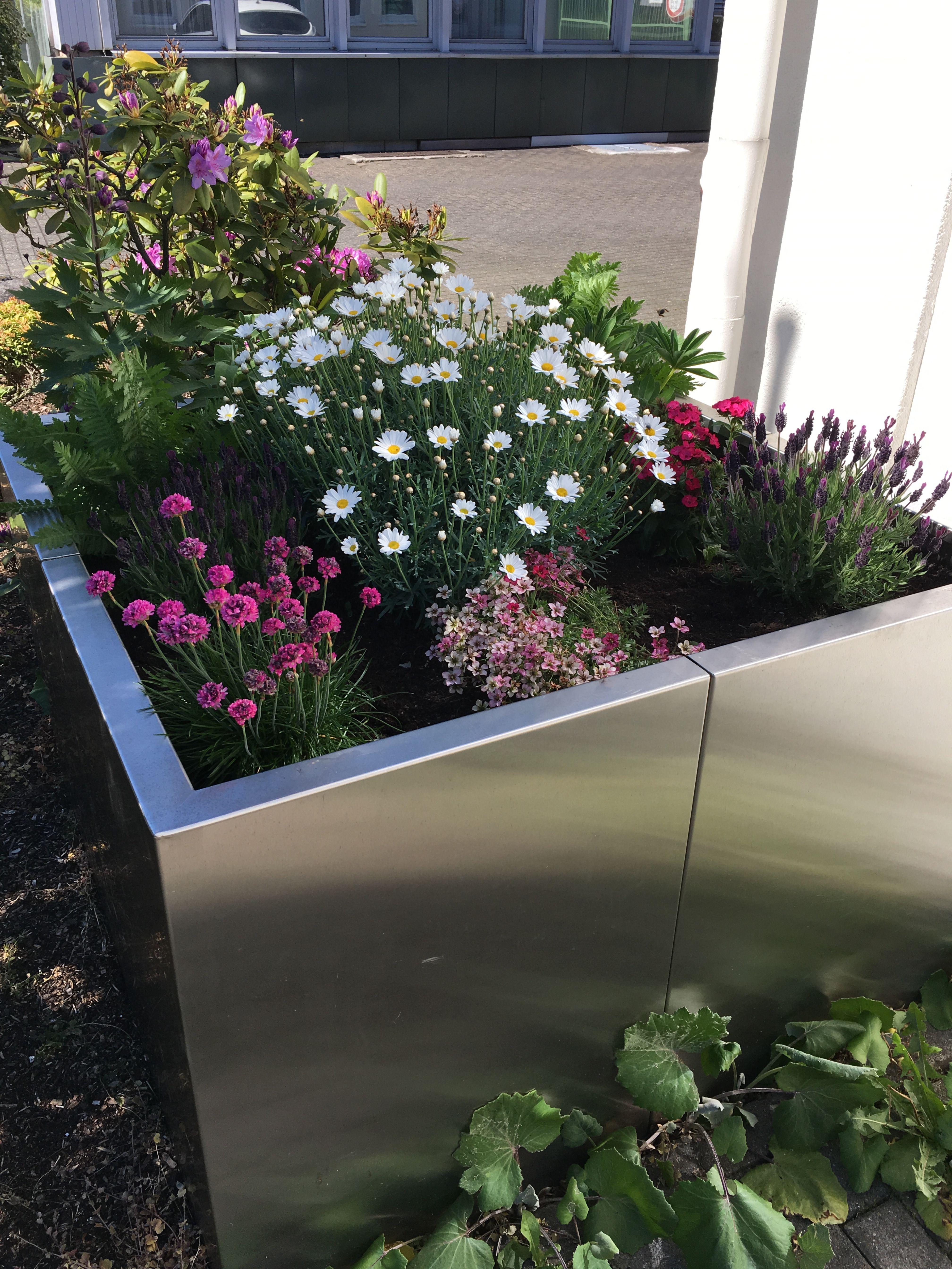 Der Rucken Sagt Danke Hochbeete Von Lizzy Heinen Hochbeet Pflanzen Gartengestaltung