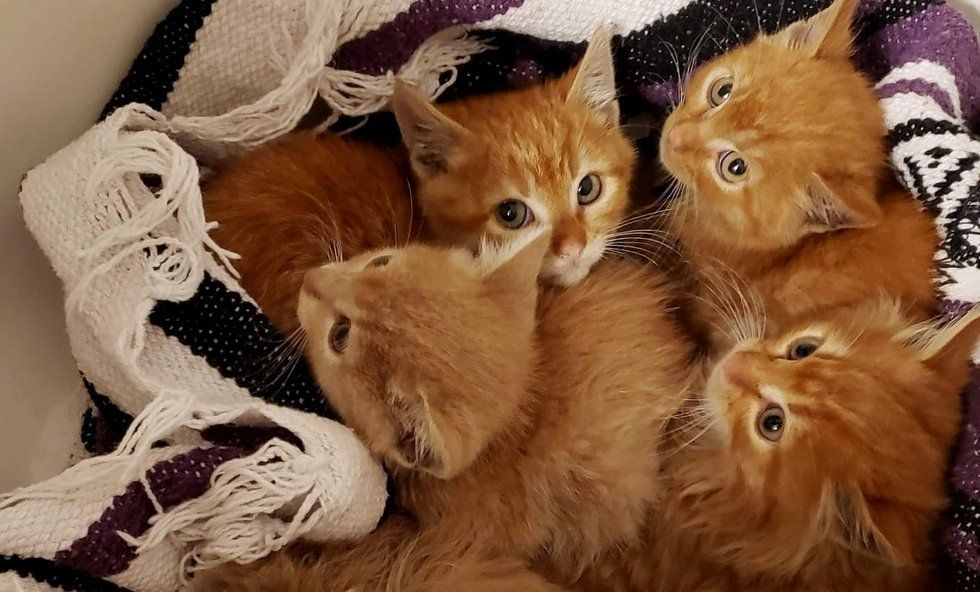 Kittens Rescued From Pile Of Scrap Wood Learn To Cuddle For The First Time Kitten Rescue Paws Rescue Cat Mom