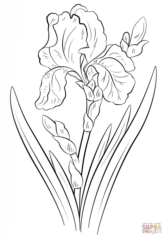 Blue iris super coloring borduurwerk patroon for Iris flower coloring page