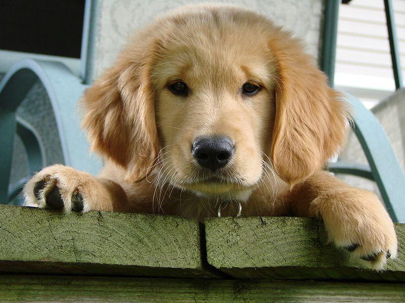 Pin Auf Dog Breeds And Training