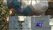 The State of Virginia is now willing to pay for you to take up beekeeping. The Virginia General Assembly created...