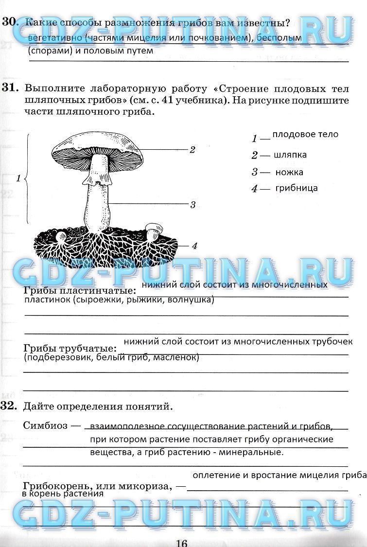 Красильникова 6 класс ответы