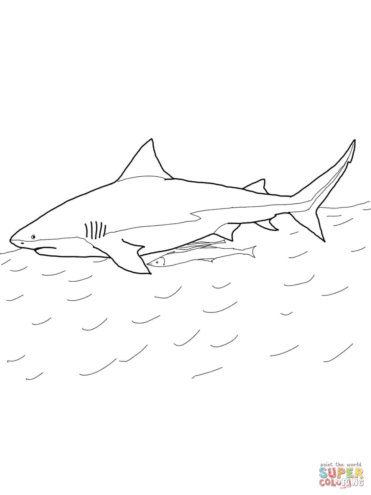 Sharks Coloring Pages Free Coloring Pages Coloring Pages For