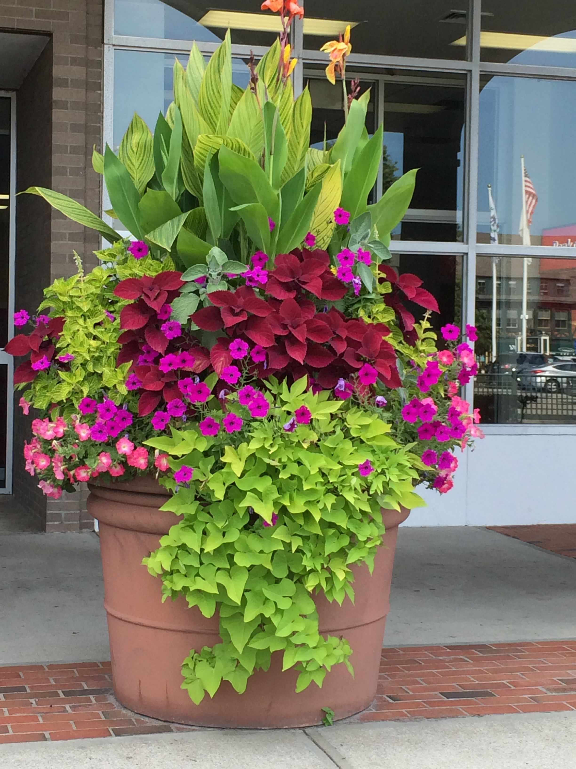 This Is A Really Big Pot But This Could Be Done On A Smaller Scale To Enjoy Tropicals In A Coole Flower Pots Outdoor Container Gardening Flowers Porch Flowers