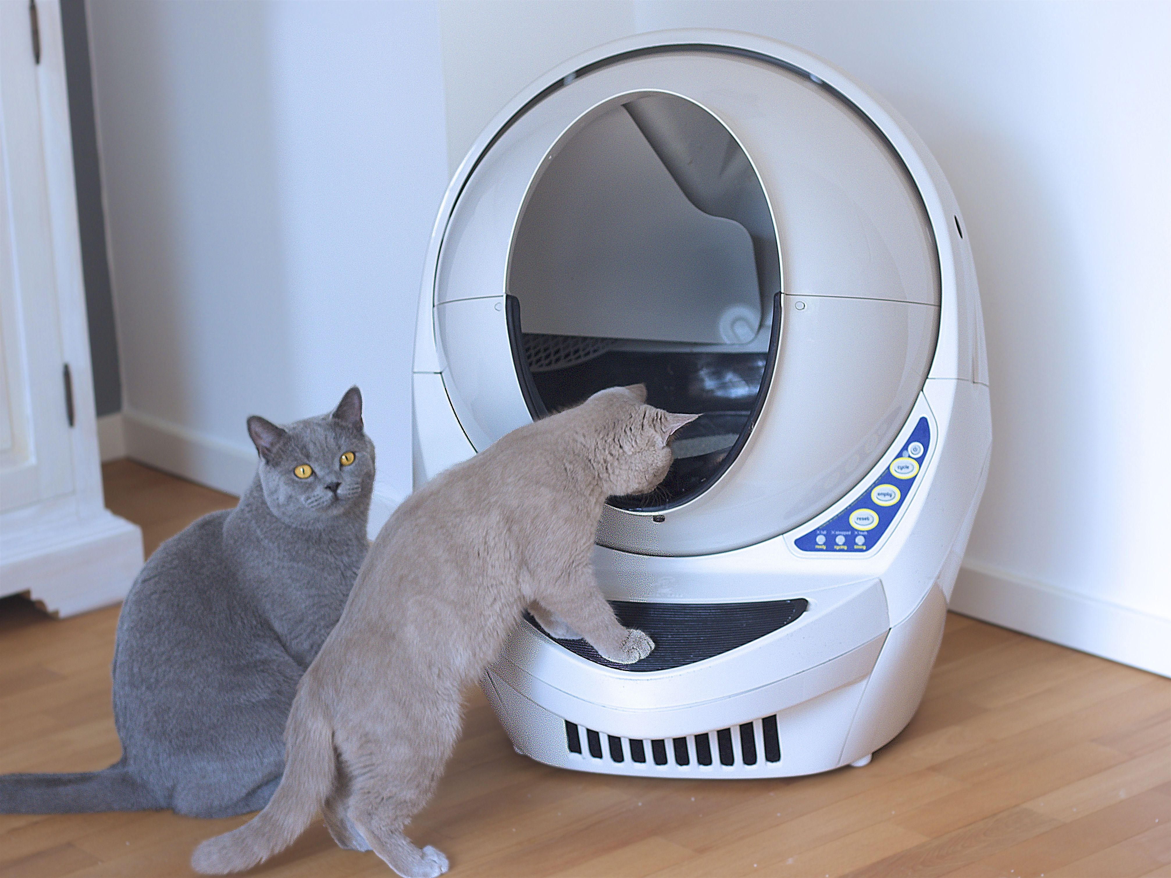 The Litter Robot Knows When Your Cat Is Inside And When It S Time To Clean Up Once Your Cat Exits A Timer Cou Best Cat Litter Self Cleaning Litter Box Litter