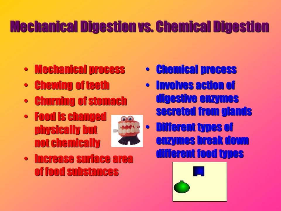 Physical vs chemical digestion