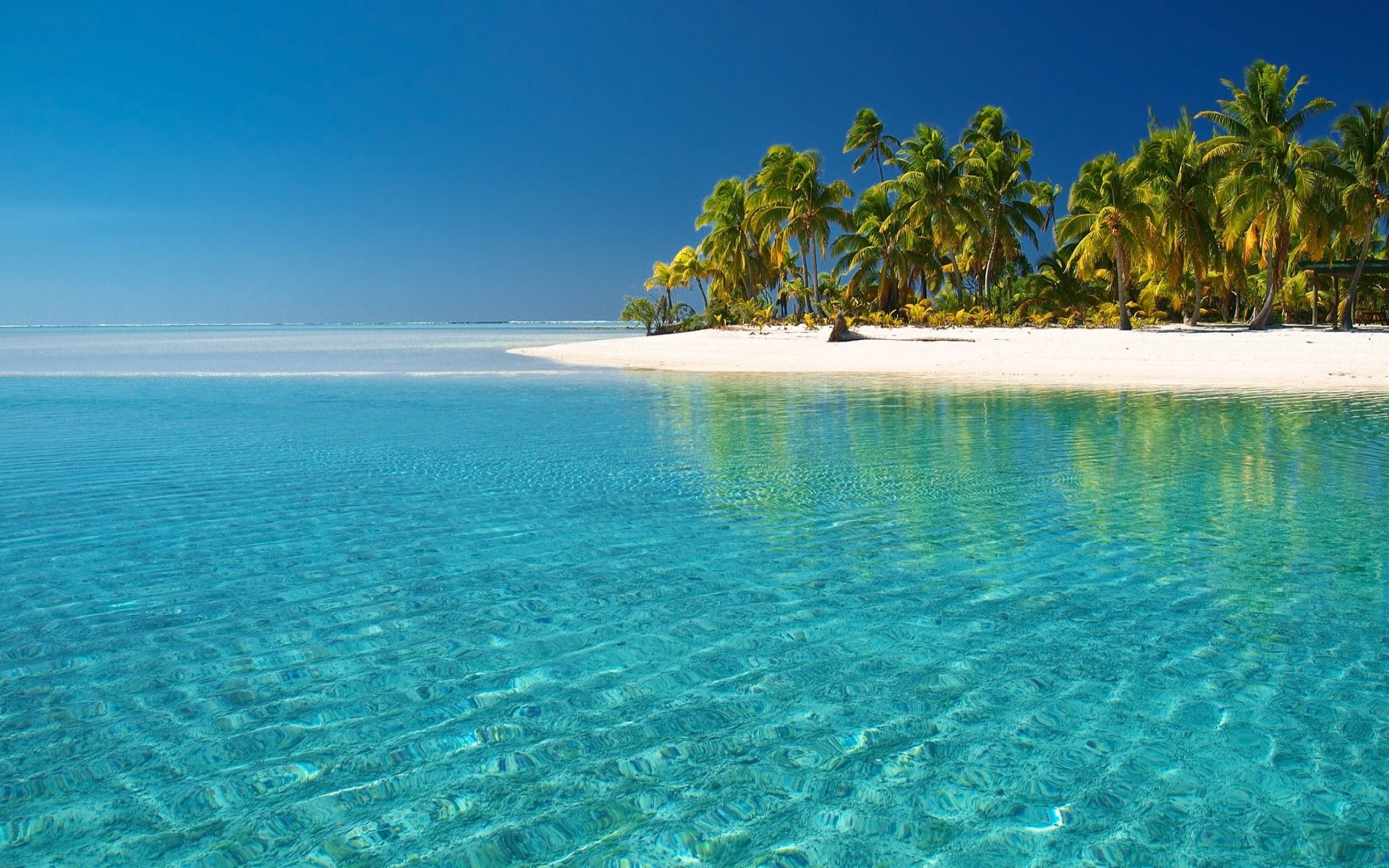 Beaches Palm Water Nature Beaches Clear Fish Sky Underwater Trees