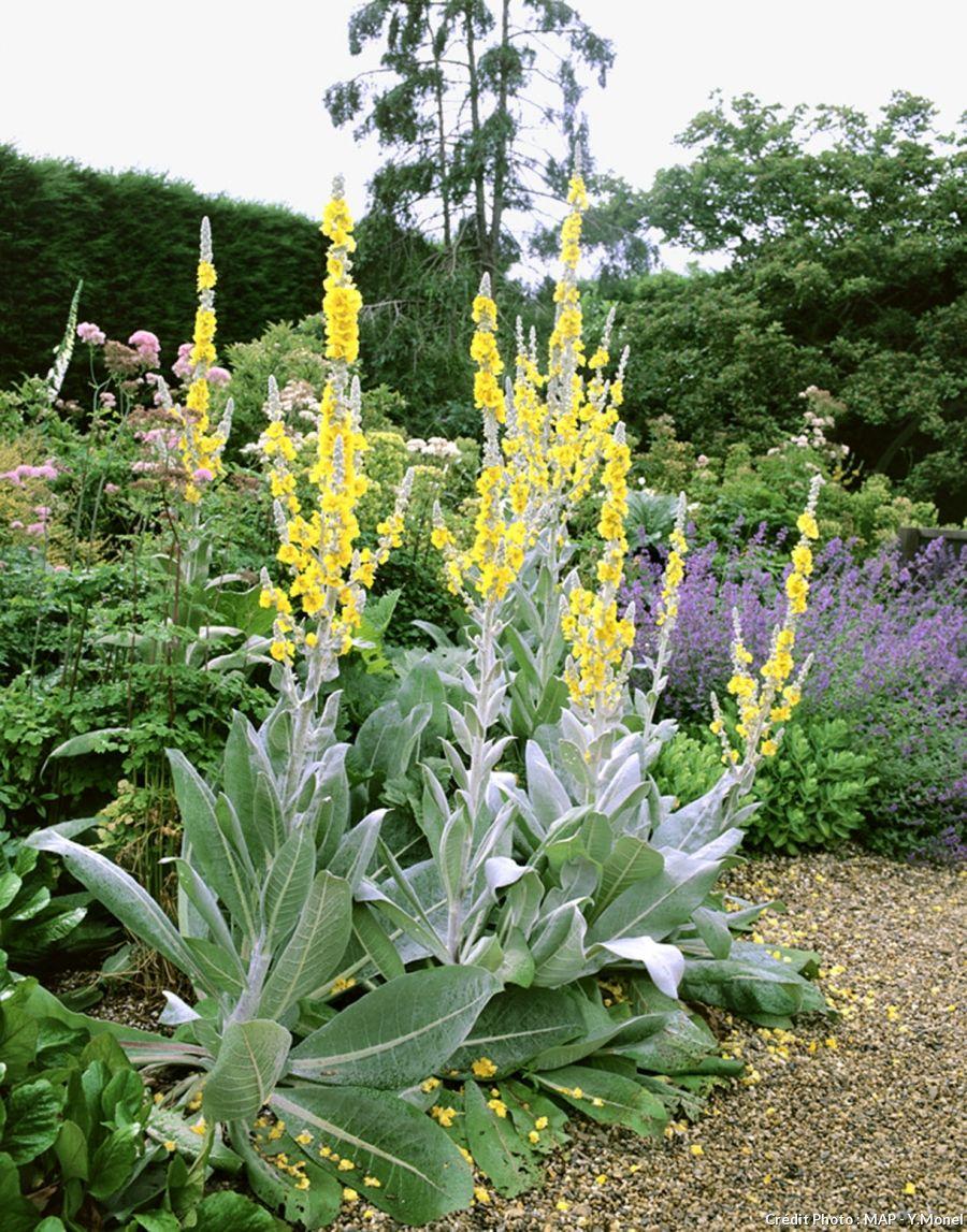 10 plantes faciles qui r sistent au manque d eau fleurs for Fleurs au jardin