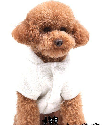 Cozy It S A Little Sheep Sweater With A Fluffy Tail Cute Animals Cute Puppies Pet Toys