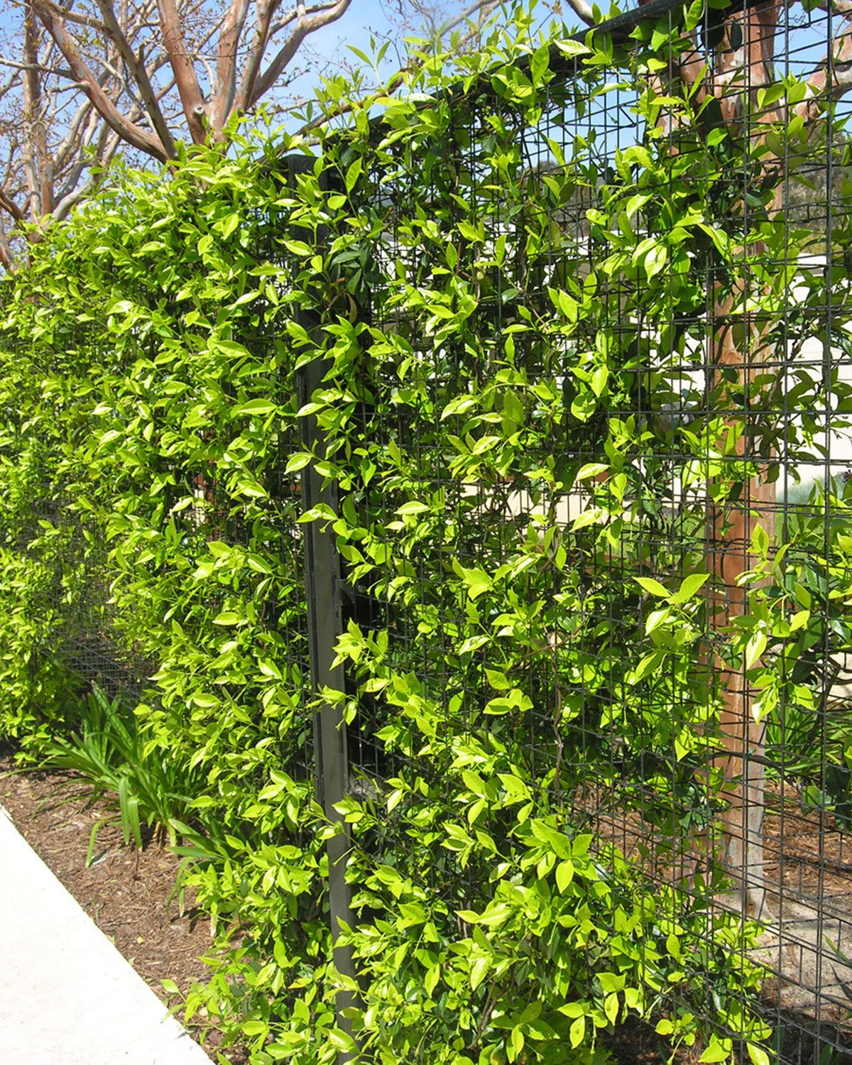 Elements Trellis Fence Greenscreen Yard Water Fountains