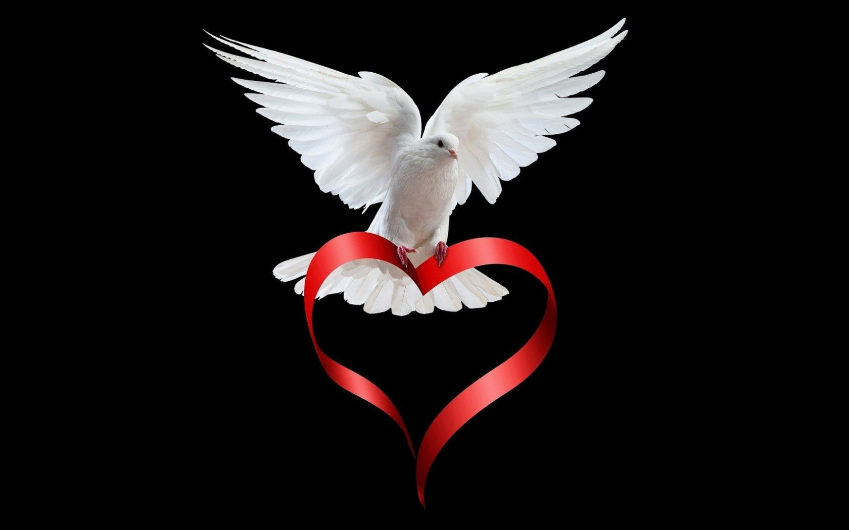 Dove Of Peace Love Is Everywhere Animal Wallpapers Hd
