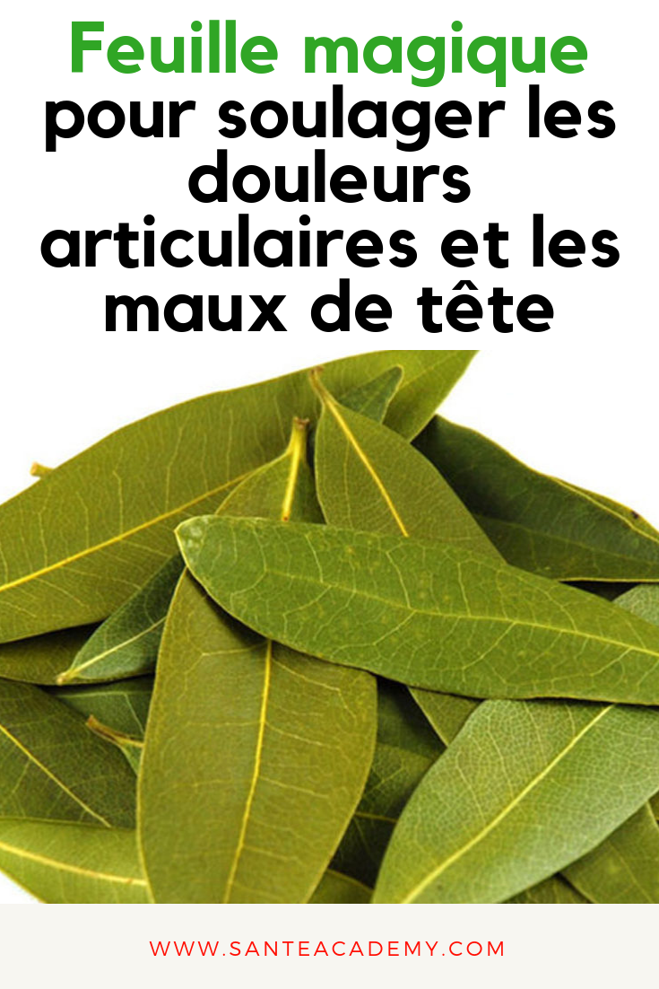 toxine laurier