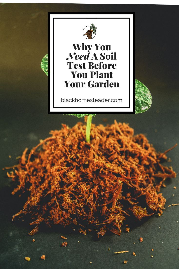 Why You Need A Soil Test Before You Start Your Vegetable ...