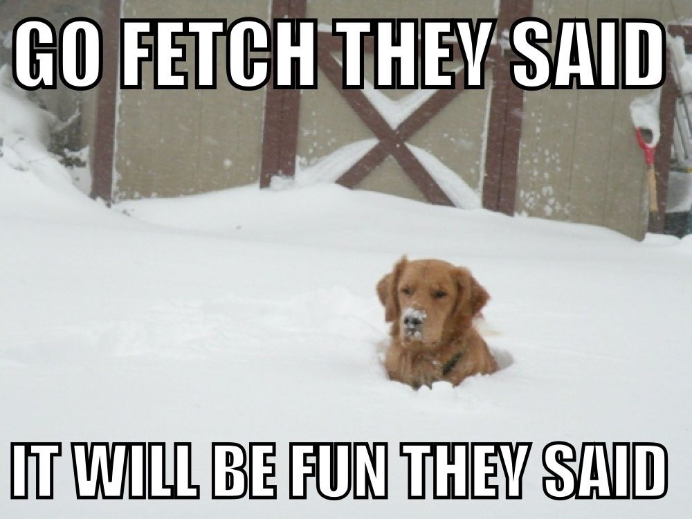 Go Fetch They Said It Will Be Fun They Said Funny Snow Pictures Funny Animal Pictures Funny Animals