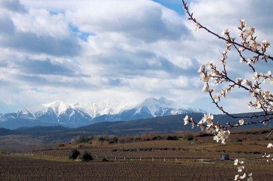Le pic du Canigou culminant à 2784 m, représente un symbole fort pour les catalans. Emblème des Pyrénées Orientales, il est omniprésent dans les paysages du Roussilloncar on peut l'apercevoir de très loin. © André Bouyssi  http://www.linternaute.com/