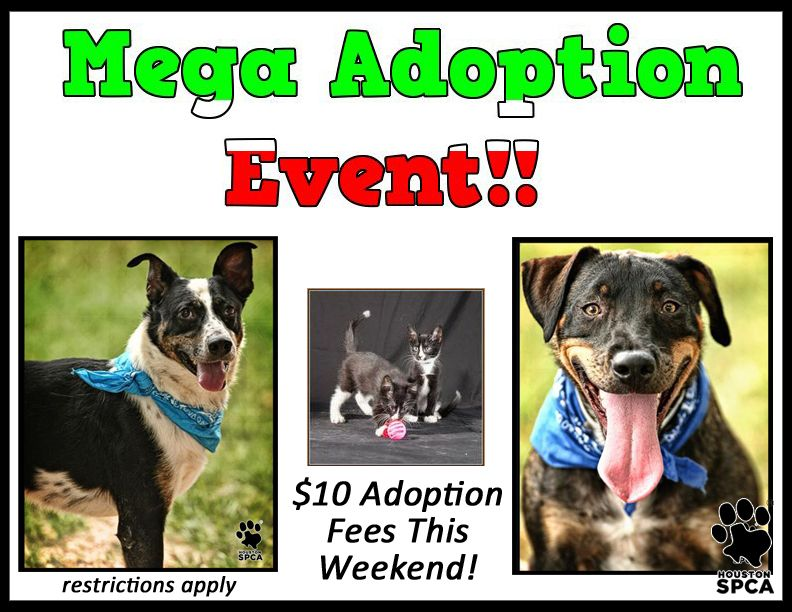 Make Plans To Attend Our Mega Adoption Event This Friday Saturday And Sunday October 4 6 All Kittens Cats And Dogs Adoption Options Adoption Dog Cat