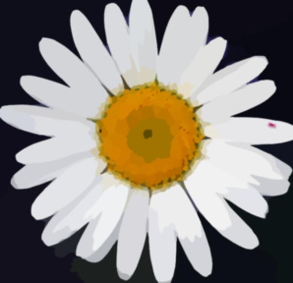 White Daisy Flower Clip Art Large Daisy flower