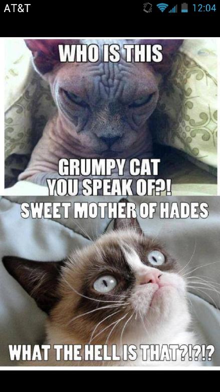Grumpy Cat Freaks Out...