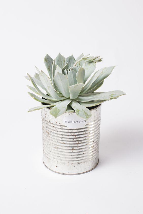 cache pot cactus boite de conserve varios pinterest jardins deco et fleurs. Black Bedroom Furniture Sets. Home Design Ideas
