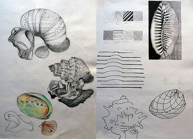 Contour Line Drawing Of Natural Forms : An exceptional international gcse art sketchbook shells