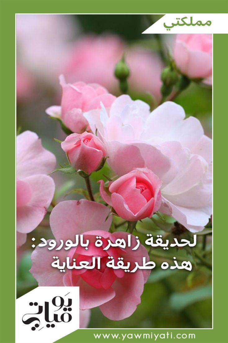 يومياتي موقع المرأة العربية العصرية الصفحة الرئيسية Plants Flowers Rose