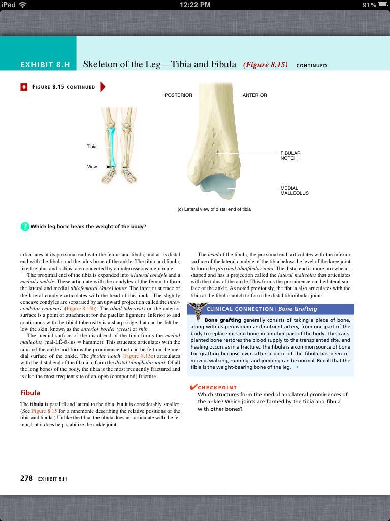 anatomy appendicular skeleton images human anatomy learning
