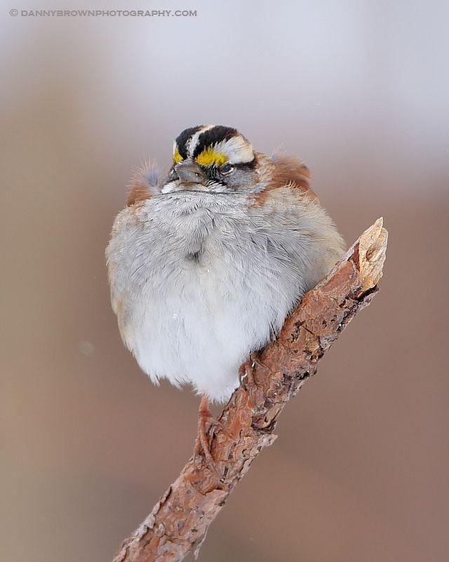 Puffed Up | Beautiful birds, Common birds, Pretty birds