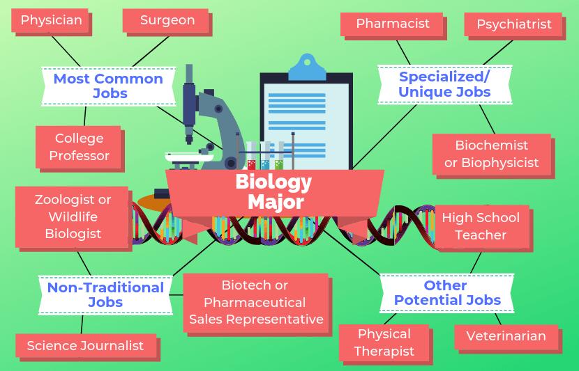 12 Jobs For Biology Majors Biology major, Biology
