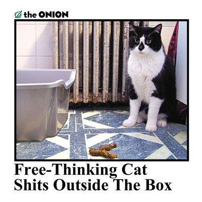 Pin On Cat Shit