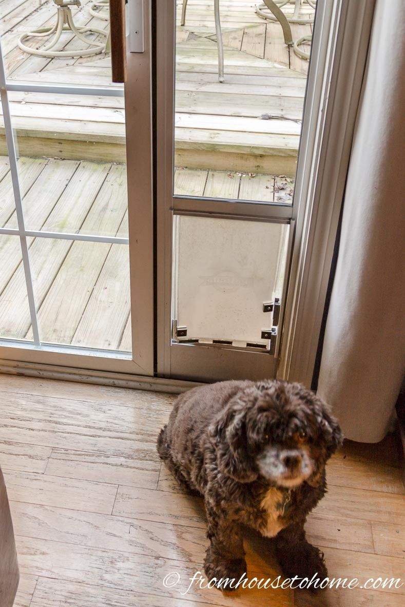 diy dog doors. Winston In Front Of His Dog Door That He No Longer Has To Share - How Keep The Cat From Using 3 Options Buy And A DIY Diy Doors